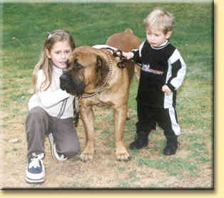 Big boerboel little kids
