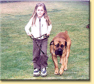 boerboel and girl