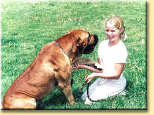 boerboel with girl
